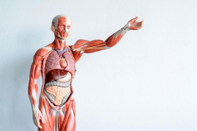 Regenerarea corpului uman