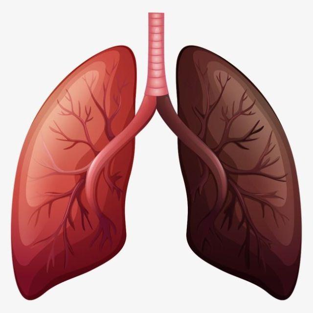 Plante care combat bolile pulmonare