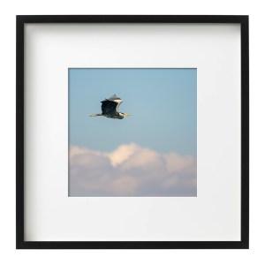 Grey Heron Irish Bird