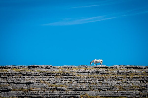 Horse on a Cliff Burren Clare