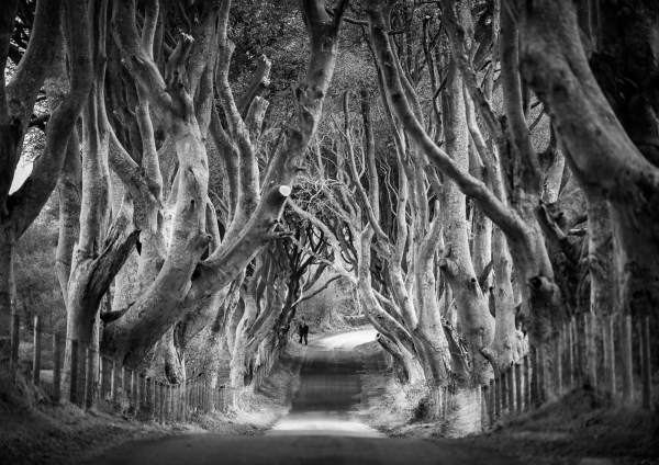 Dark Hedges Antrim Northern Ireland