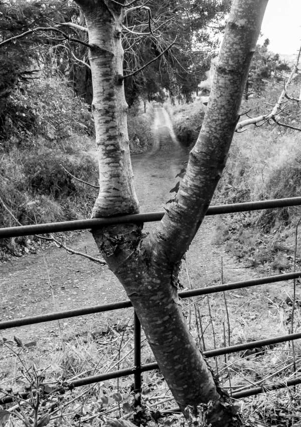 Gate Tree Leadmines Dublin