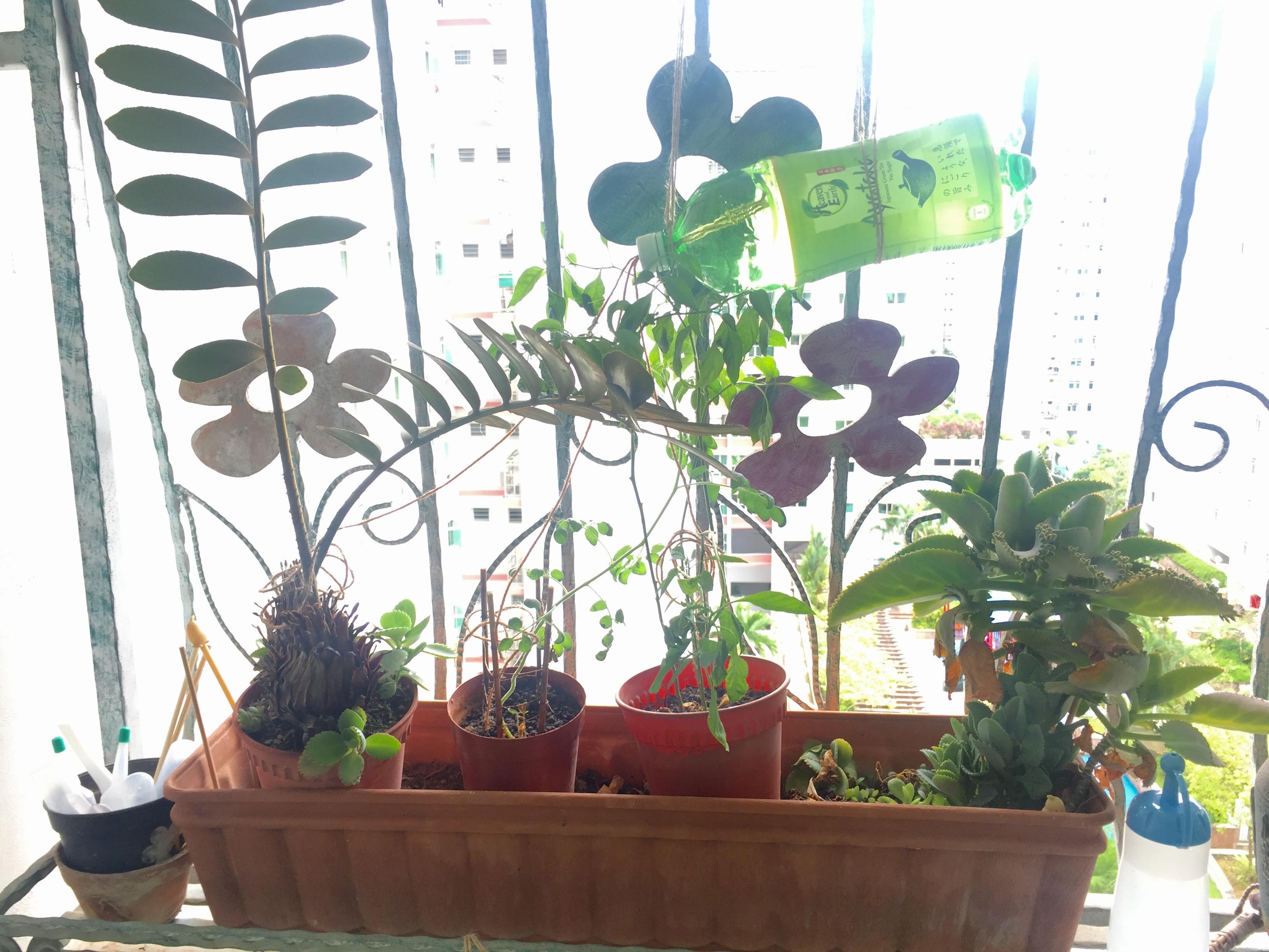 DIY Drip Feed for Plants