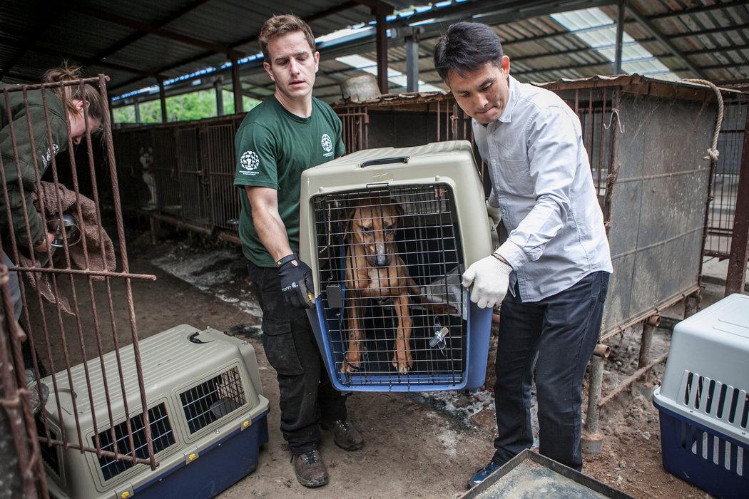 Los perros de Corea del Sur que se salvaron de acabar en un plato