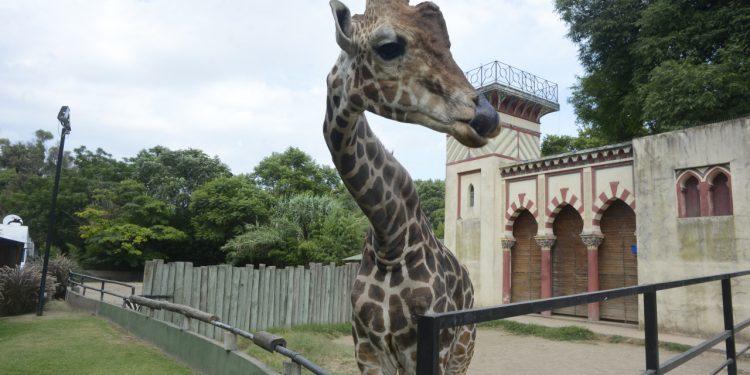 Gobierno de la Ciudad cierra el Zoo porteño: será convertido en un ecoparque