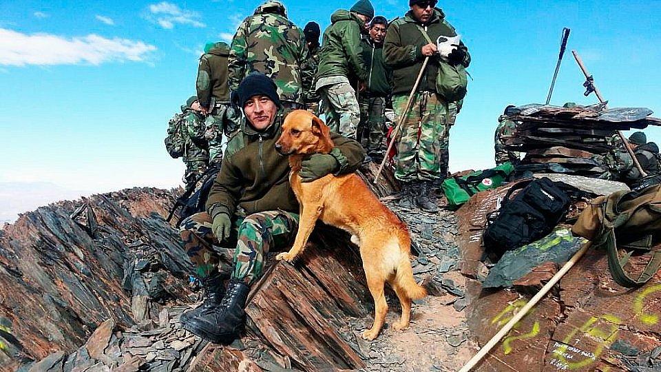 De Cabo a Sargento: el increíble perro del Ejército que fue ascendido