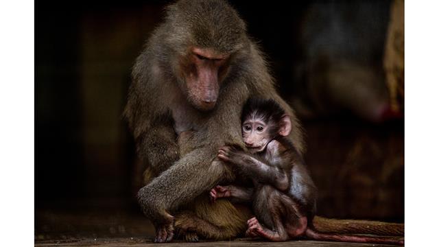 En fotos: a un año del cierre del Zoológico de Buenos Aires, los animales aún siguen en sus jaulas