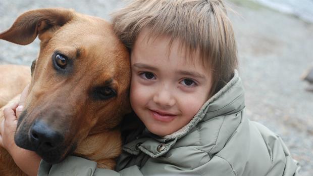 Día Internacional del perro callejero: 5 refugios en los que se puede adoptar una mascota