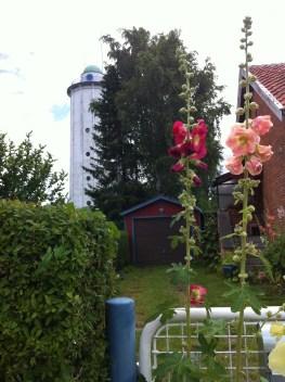 Hvidovre Vandtårn: hollyhocks