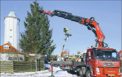 Xmas tree being felled