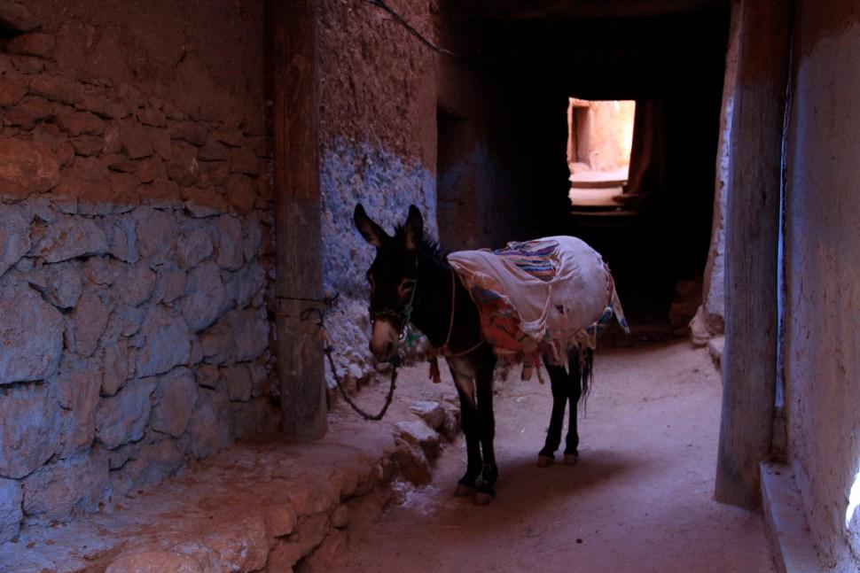 mule de trait