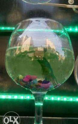 حوض سمك صغير..