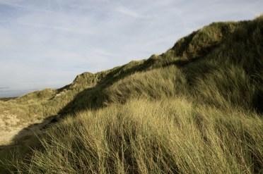 Dunes, herbes folles 3