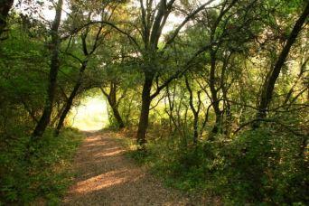 Chemin sous les arbres