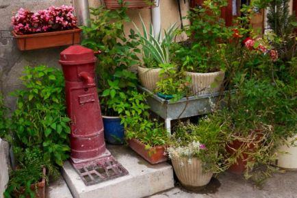 Plantes sur un trottoir