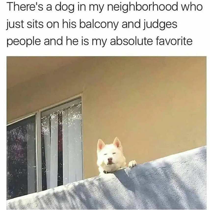 Cringe dog jokes