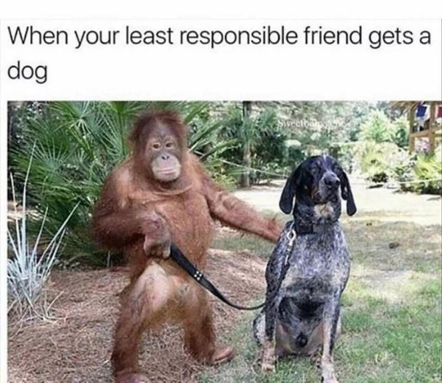 stupid dog owner memes