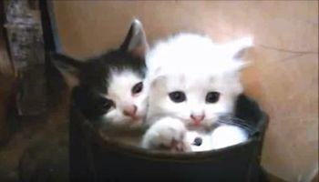 カワイイ子猫