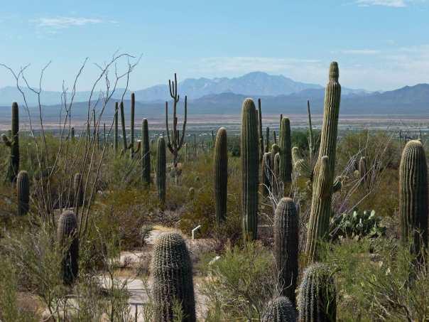 Saguaro National Park, Tucson AZ