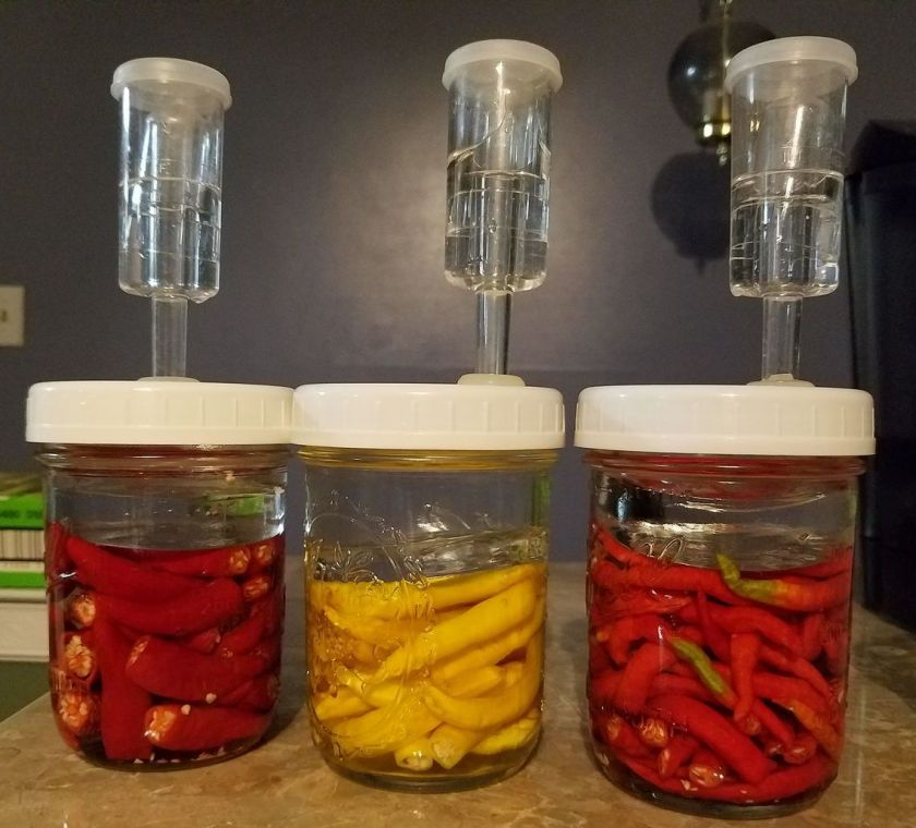 Peppers mailed from Seattle fermenting in NH