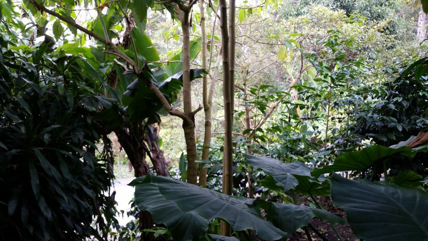 Photo of verdant rain forest with lush green leafy trees. Not a botanist.