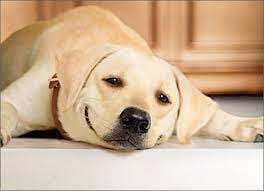 Dog on Floor Happy