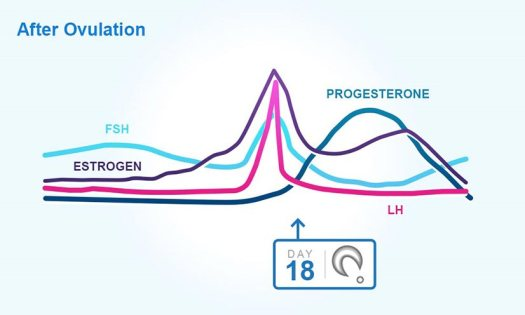 Hormones after ovulation graph