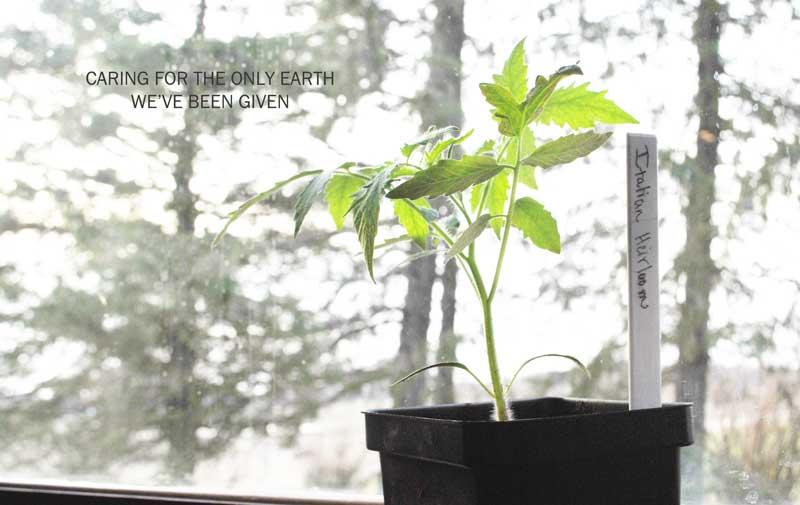 Earth Day garden plant