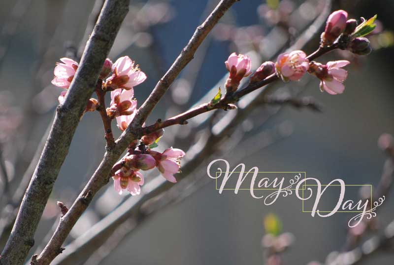 May Day blossoms