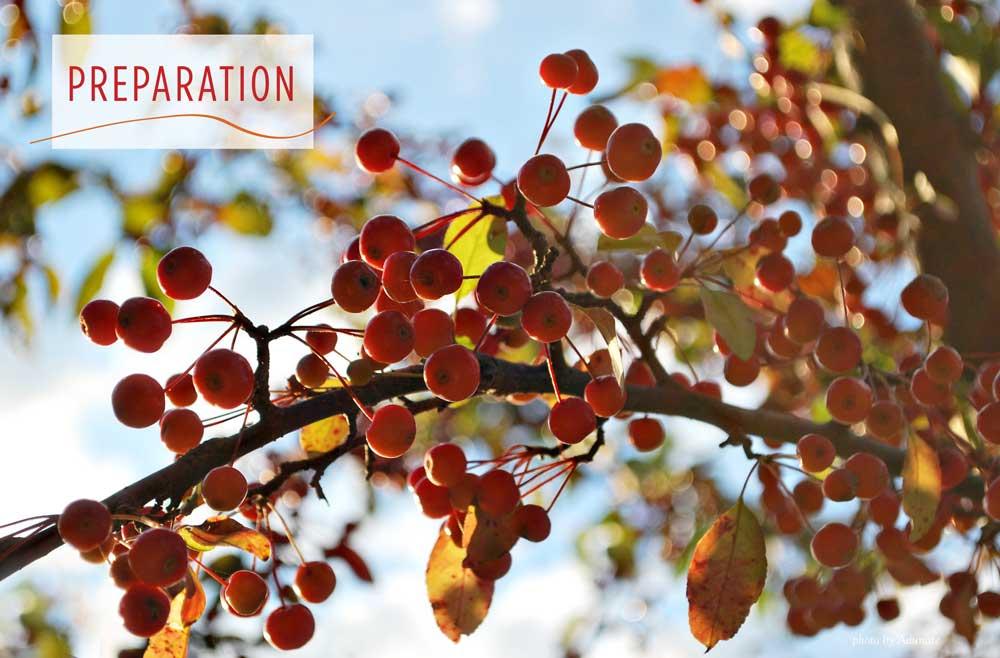 Autumn crabapples in Wisconsin