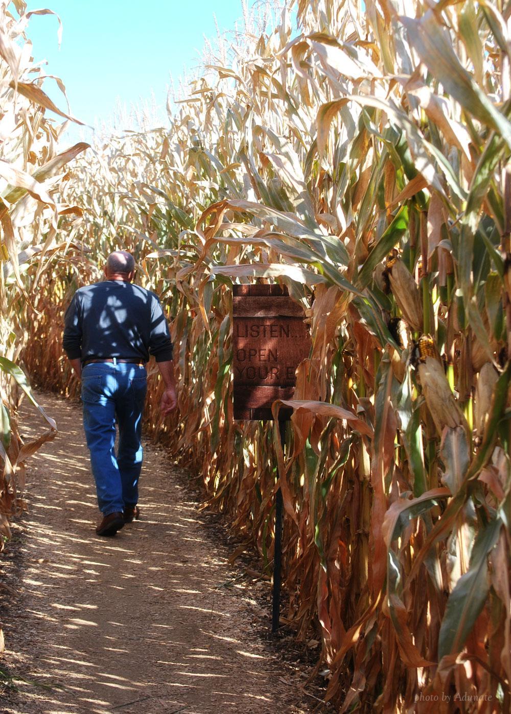 Fermentation Fest Corn Maze