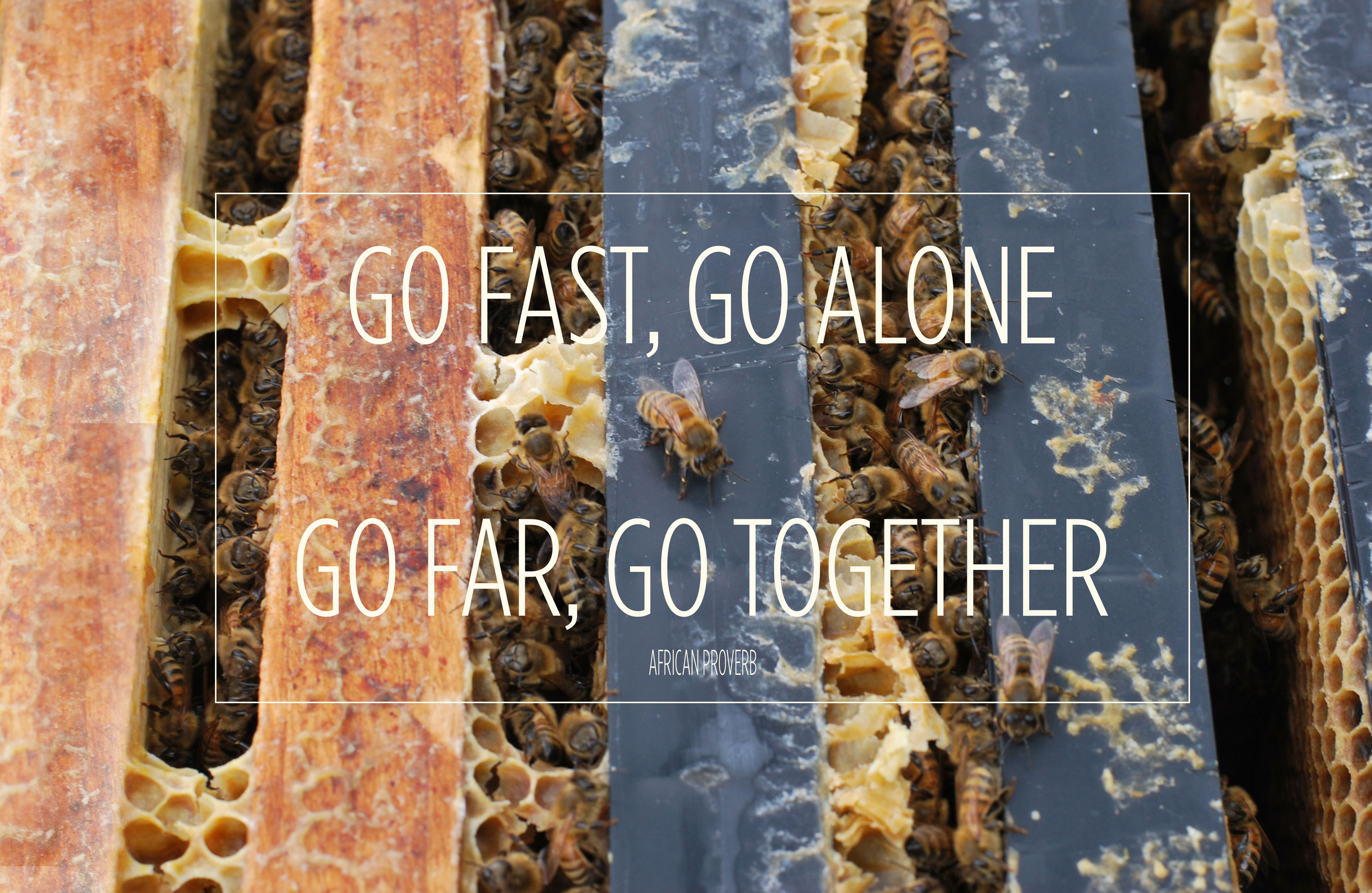 Frame of honeybees: Go Fast, Go Alone. Go Far, Go Together