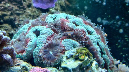 best foods to feed corals