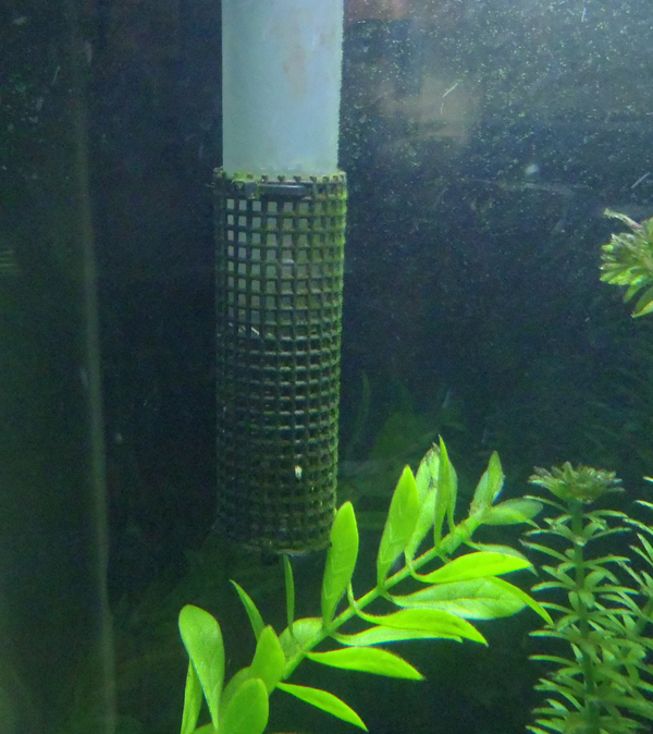 aquaclear filter intake screen cover