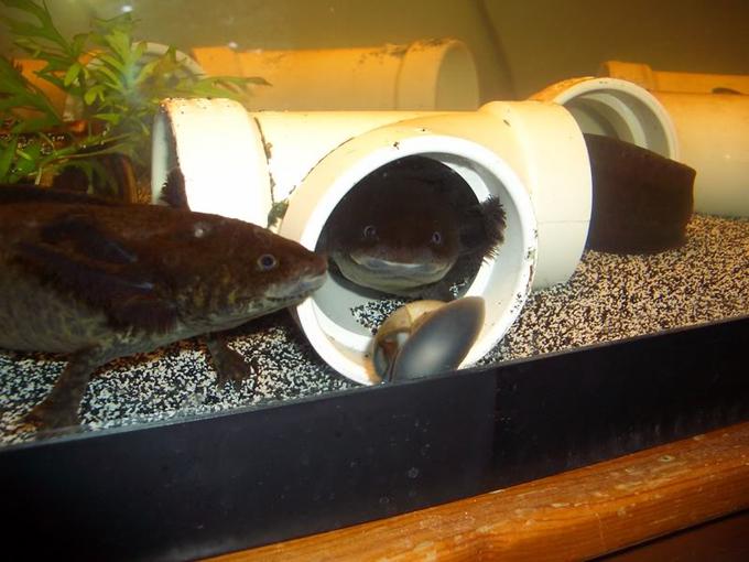 best filter for axolotls