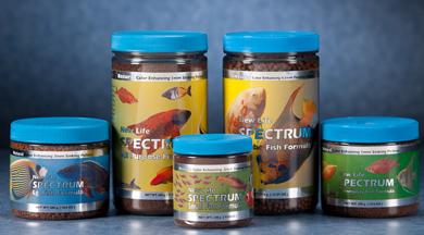 best fish food new life spectrum