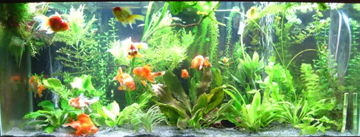 Sand As A Superior Substrate Advanced Aquarium Concepts