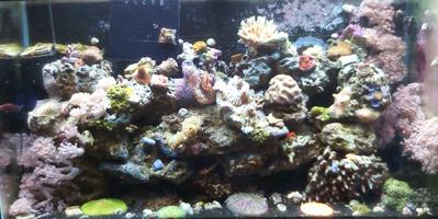 best black sand for saltwater reef aquarium