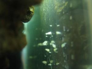 Reef Tank Filter Feeders