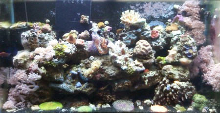 Best reef tank setups