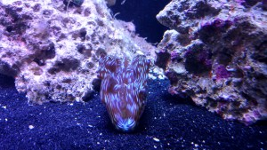 reef coral fish tank clams