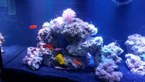 aquarium reef saltwater fish coral tank