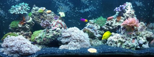 fish tank websites