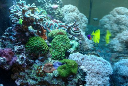 best natural reef tank methods