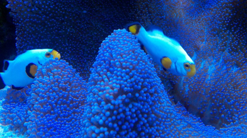 how to take care of anemones