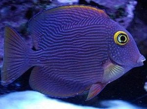 best ways to control nitrate and phosphate in a reef tank aquarium