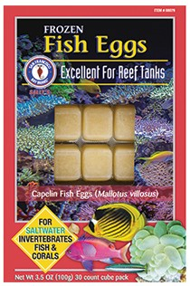 How to feed saltwater fish