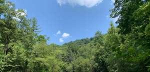North Carolina trees and shrubs and a beautiful blue sky