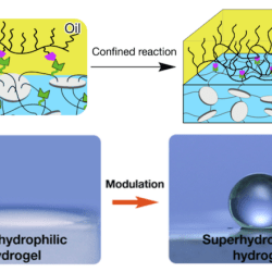 Superhydrophobic Diffusion Barriers for Hydrogels via Confined Interfacial Modification - Advance in Engineering