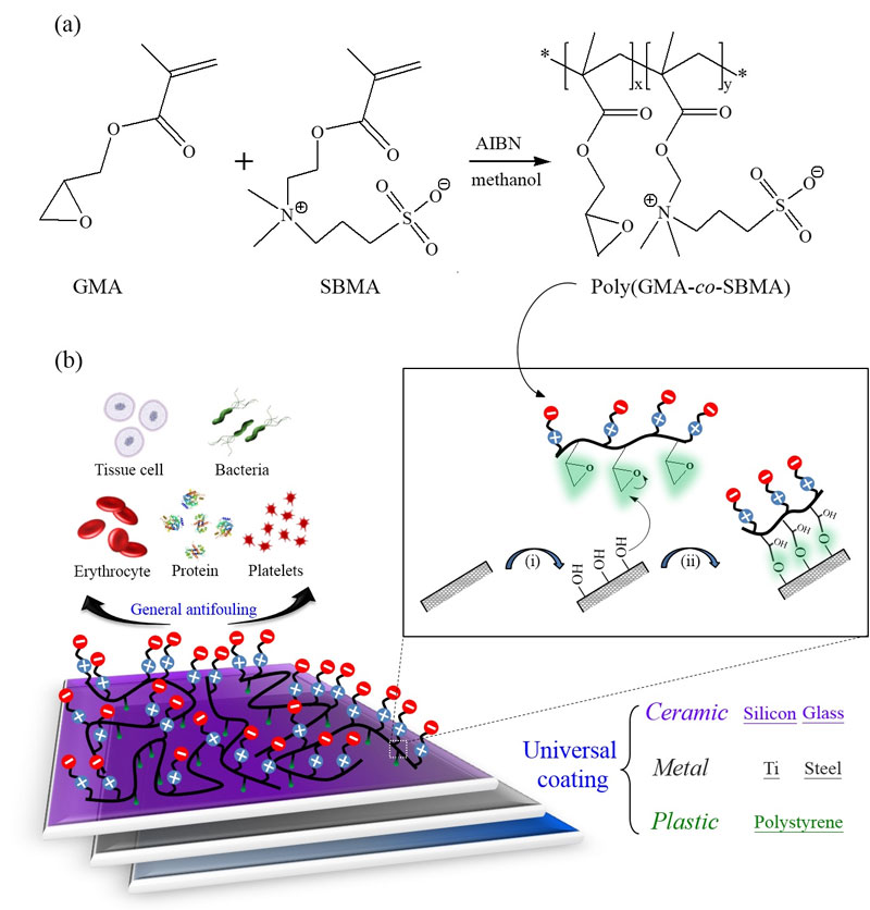 epoxylated sulfobetaine copolymers for the development of stealth biomaterial interfaces-Advances in Engineering